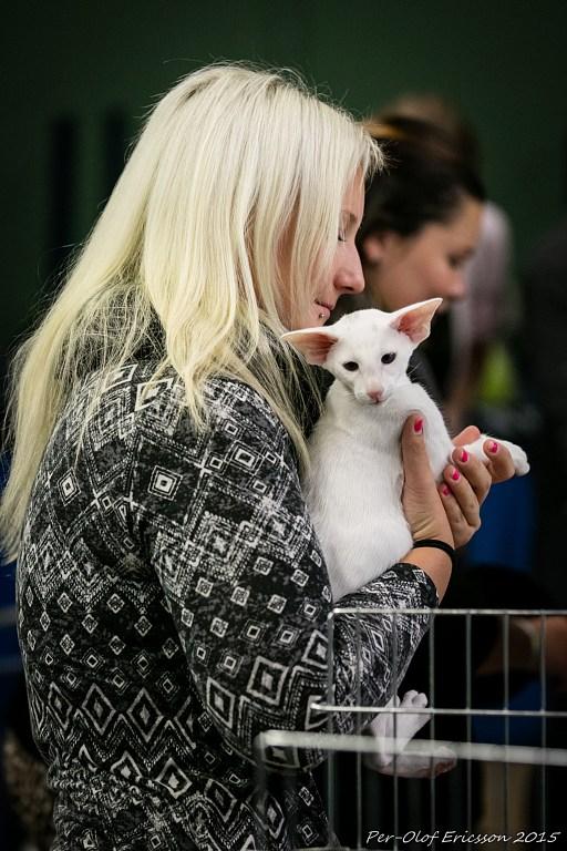 Jessica Eklund: Livet med tre katter och kattutställningar, och två hundar