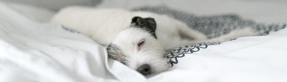 Frågor och svar om Nutrolin® kosttillskotten till hunden