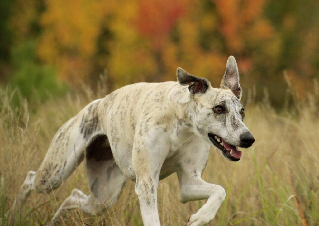 Rätt mängd E-vitamin till sporthunden