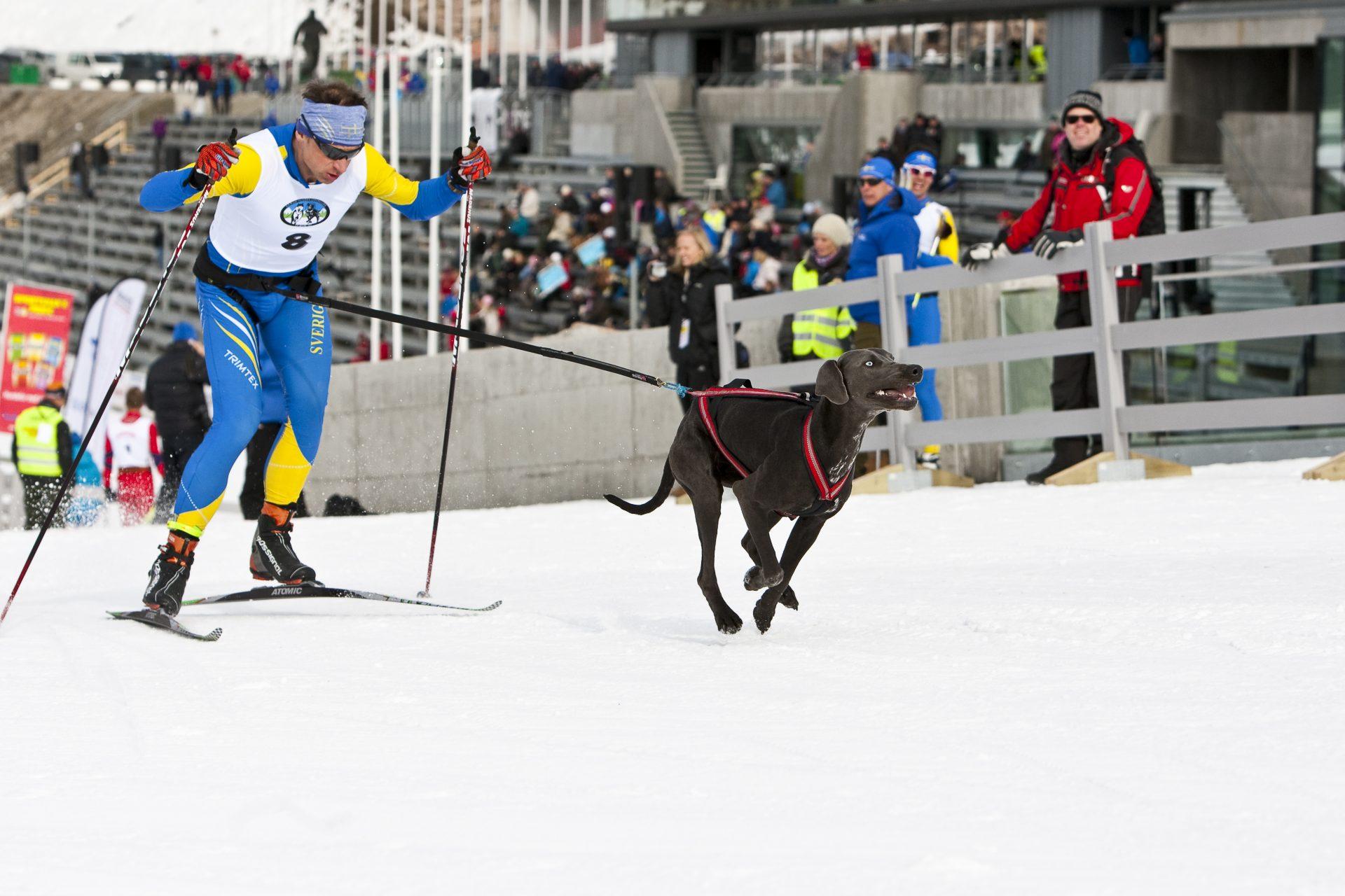 Nutrolin till sporthunden