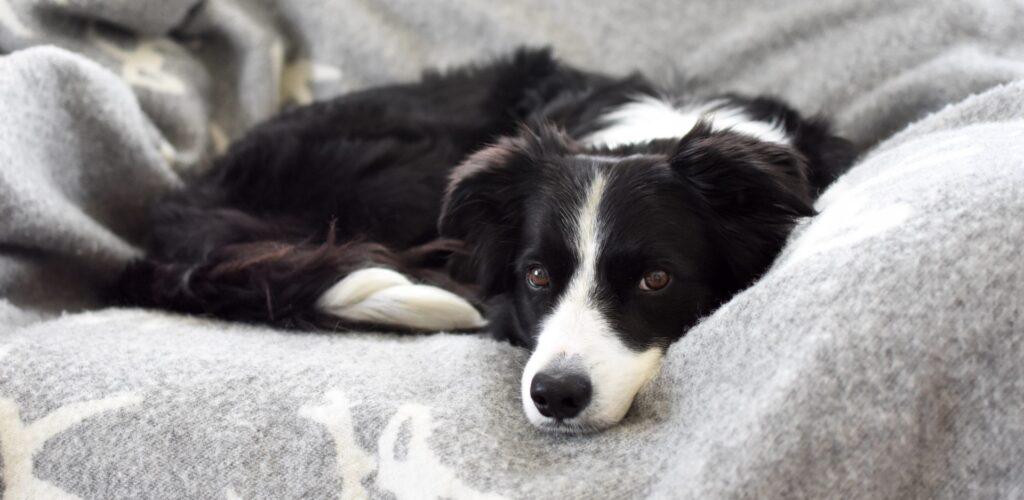 Vilka fettsyror till hunden som lider av hudproblem så som klåda eller eksem?