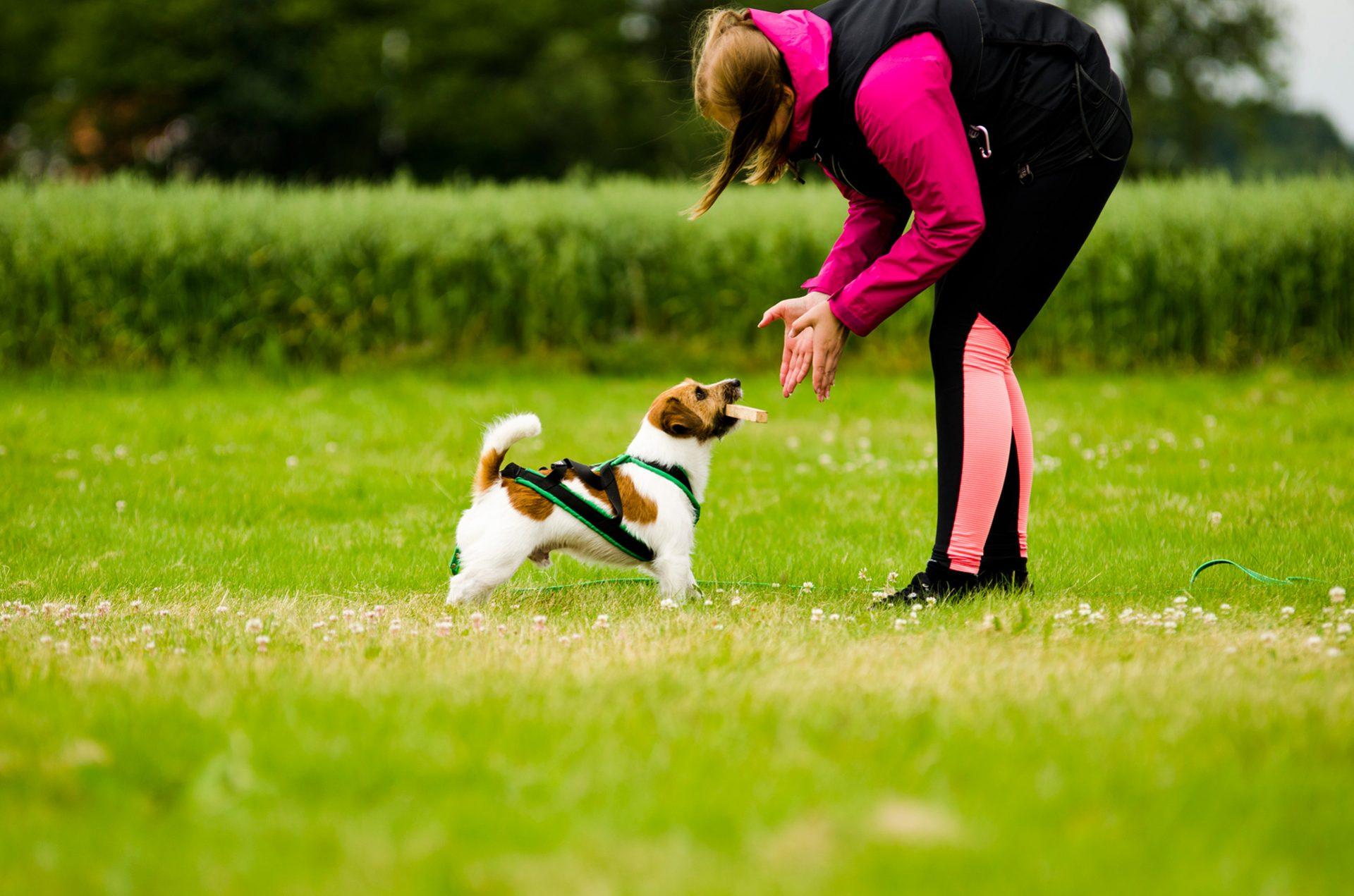 Hunden Yax lider av atopisk dermatit som orsakar klåda speciellt under pollensäsongen