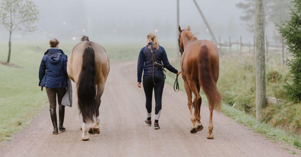 vilken olja till häst