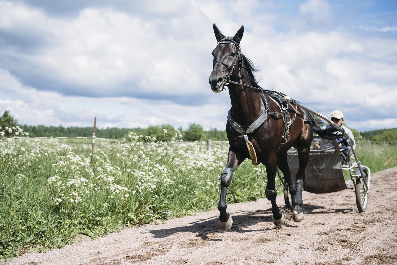 Topptravaren Seabiscuit är en mångsidig häst