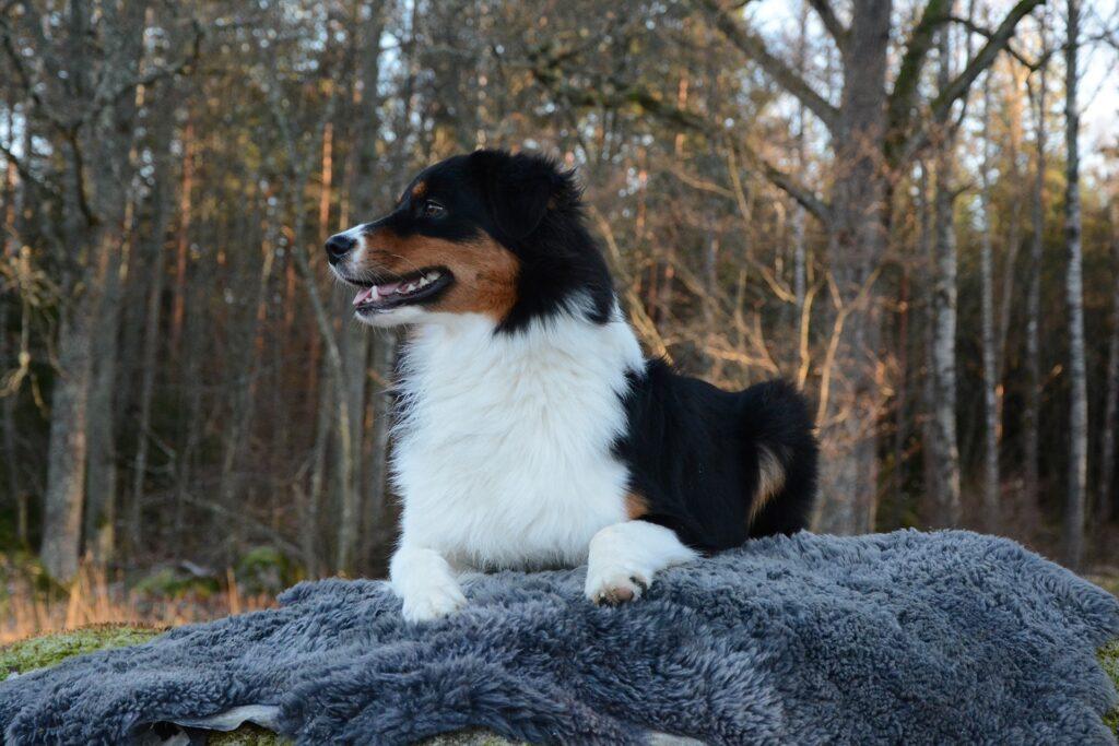 Hunden Tindra fick tät och glansig päls samt fina trampdynor