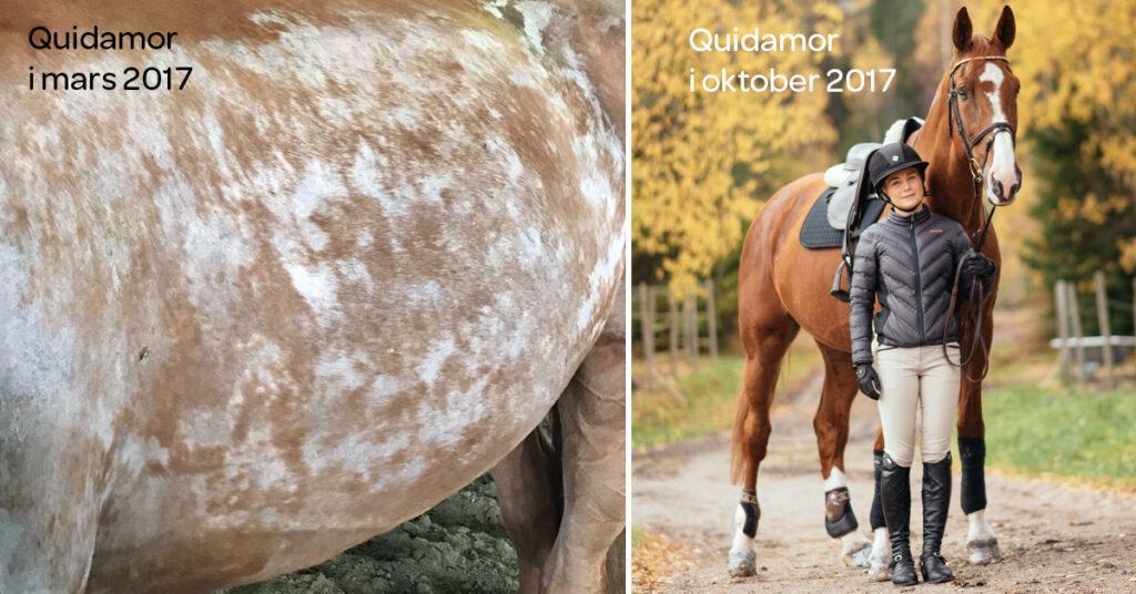 Hästen Gunvald fick hjälp mot sina svåra hudproblem