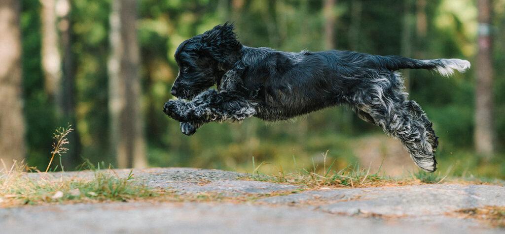 Nutrolin®-produktserien till varje hundägares och -uppfödares hjälp