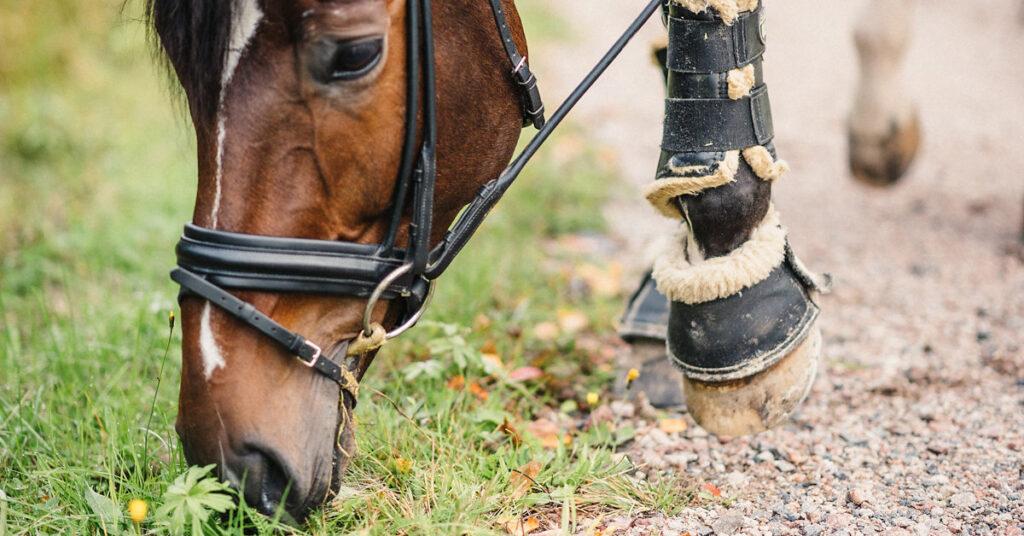 Bättre resultat genom hästens utfodring: kosttillskottens betydelse