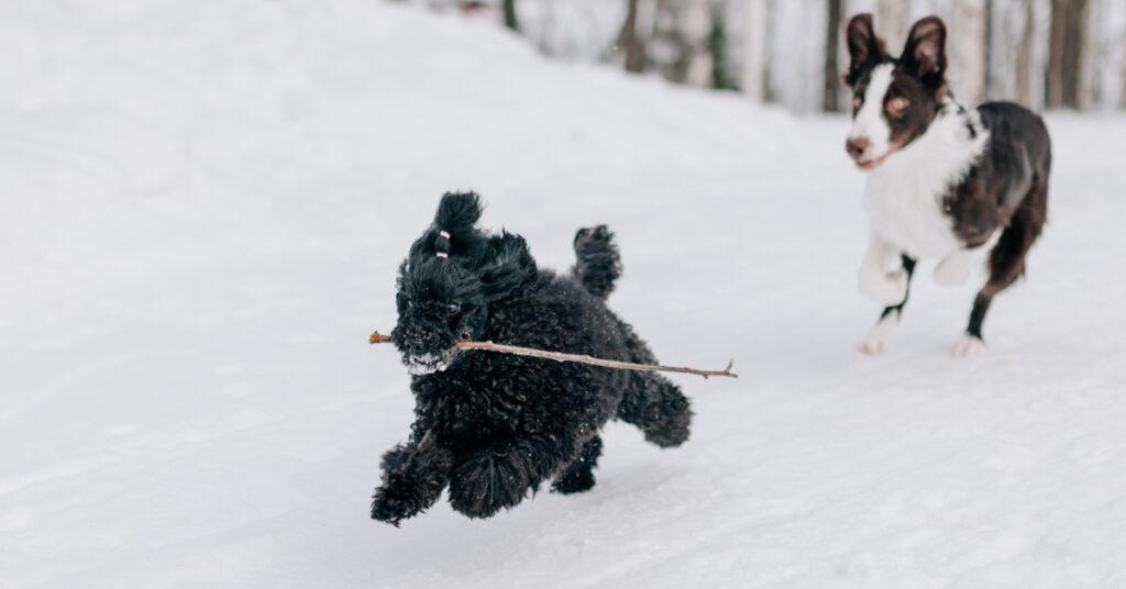 Lider din hund av hud- och pälsproblem under vintern?