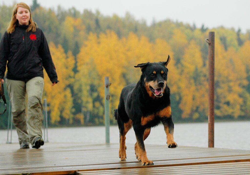Fick hund Hund Fickt