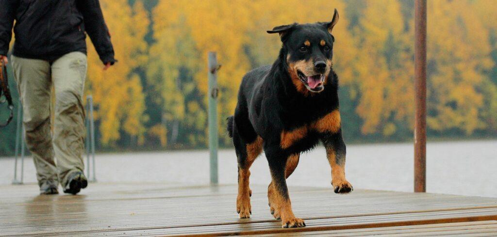 Artroshunden Nana fick många tilläggsår med tillskott i maten