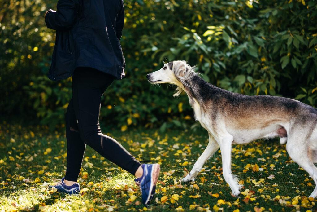 Hälsotips: har din hund redan fyllt 8 år?