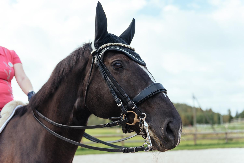 Nutrolin Horse Sport™ hjälper hästen Hertta att återhämta sig efter prestation