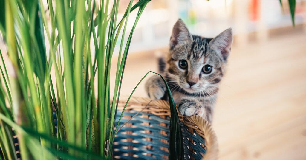Tovor i kattens päls? Katt med stela leder?