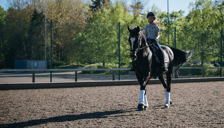 Den grådaskiga hästen Wesku var på riktigt svart