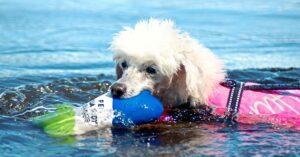 Den aktiva hunden Heka fick hjälp mot sina slitna trampdynor