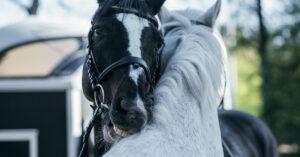 Häst med klåda, hudproblem, mjäll? Sommareksem? Glanslös päls?