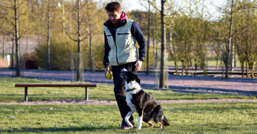 Hunden Ciao fick en ovanlig skada som orsakade hälta, men rätt tillskott hjälper honom må bra