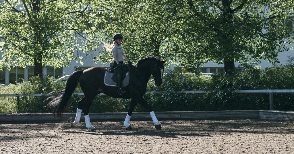 Smutsgråa hästen Wesku var på riktigt svart