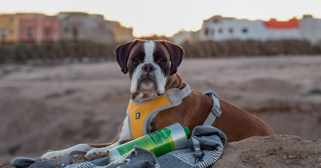 Med en boxer på Kanarieöarna - klimatförändringen orsakade hudproblem