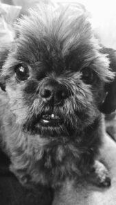 Hunden Rolle led av klåda, mjäll och fettknölar i flera år — idag är han frisk