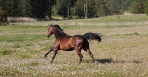 Från avelsboxen genom träning till ridskolehäst och privathäst