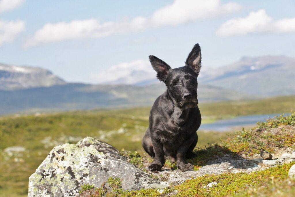 Hunden Kiba har levt med klosjukdomen SLO i två år