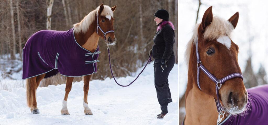 Vintern är en påfrestande tid för hästens hud och päls