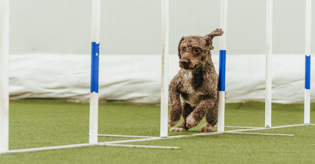 Kosttillskott till agilityhunden