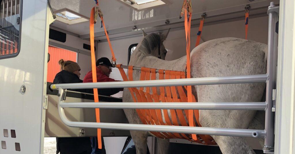 Mardrömmen på Skånsta Ryttare: hästar med viruset EHV1