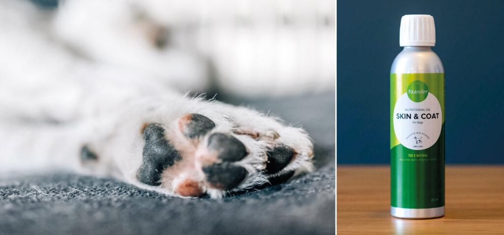 Tass-salva är inte den bästa lösningen på hundens tassproblem