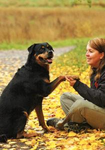 Nytt liv för hundar med artros
