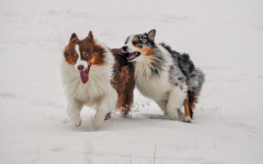 Pålagringar och ligamentskada – hur hålls hundarna smärtfria?
