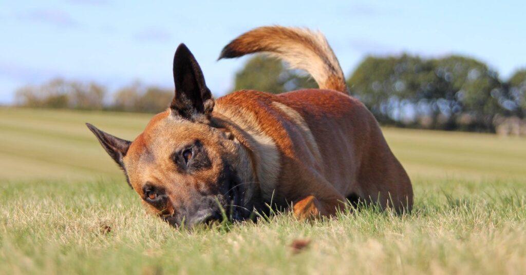 Hunden Grynet – valpen jag inte kunde sälja