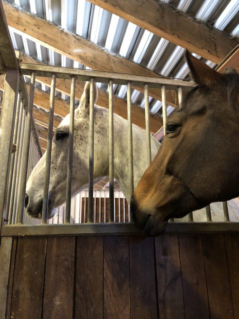 Hästarna på Skånsta Ryttare återhämtar sig från EHV-viruset