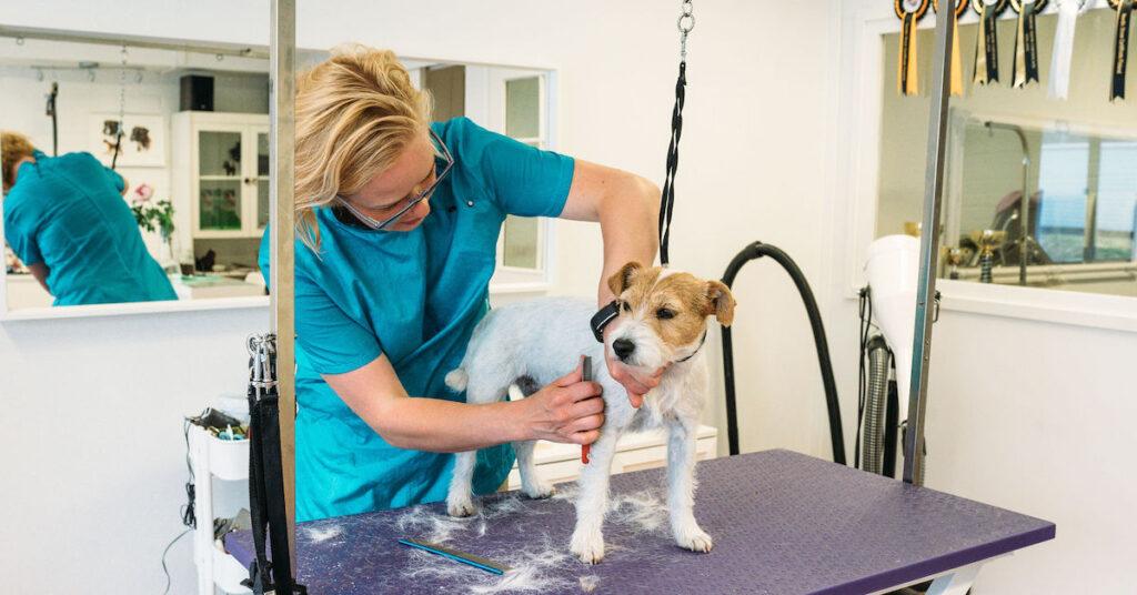 Hundens pälsvård – behöver hunden trimmas, klippas och badas?