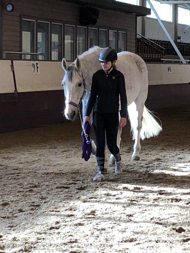 Hästen Albin rehabiliteras efter att varit sjuk i EHV-virus