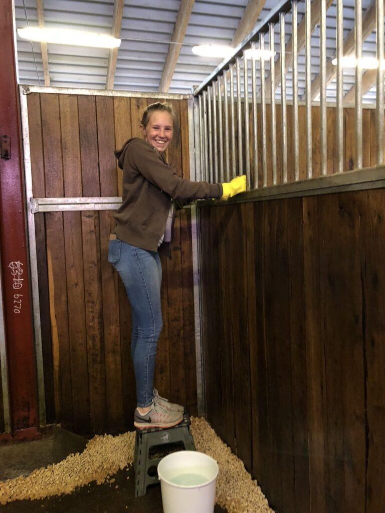 Hästen Guns box tvättas efter EHV-viruset