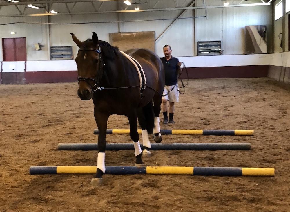 Rehabiliteringen av de EHV-sjuka hästarna på Skånsta Ryttare framskrider