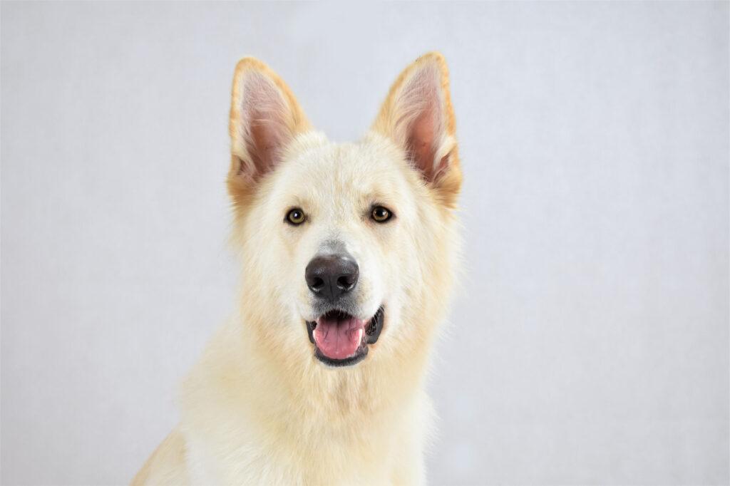 Hunden Molly fick hjälp mot sina fukteksem och öronproblem