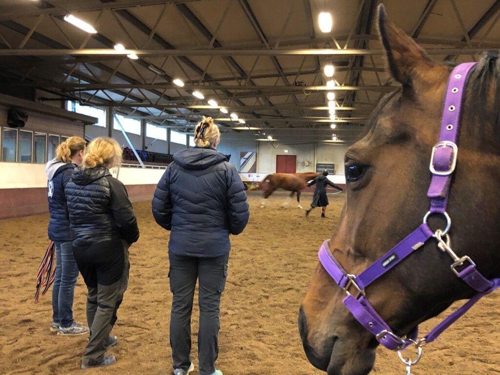 Ettårskontroll av hästarna som drabbades av EHV-1