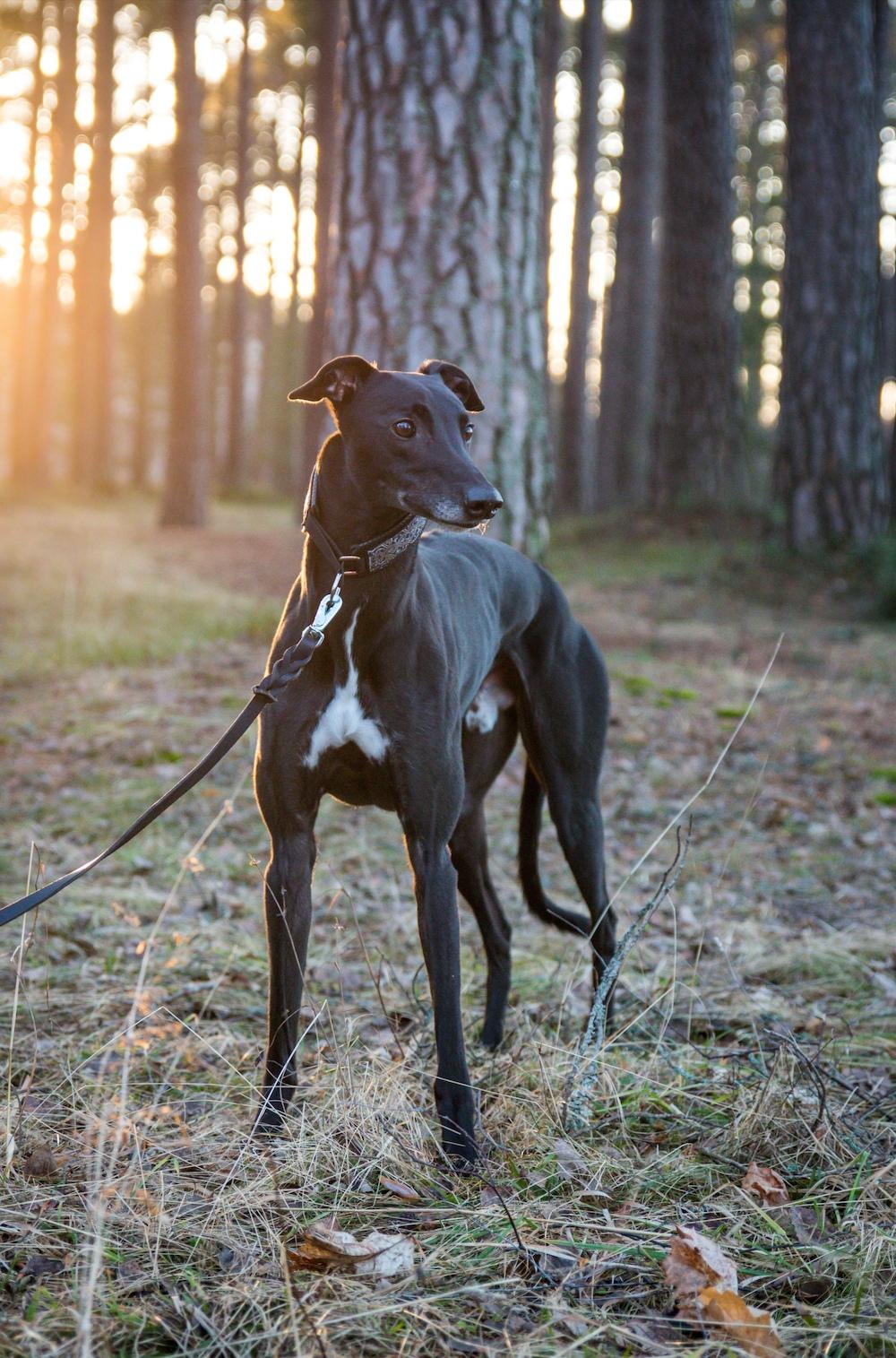Hunden Eak fick sammetssvart päls och slitstarka trampdynor