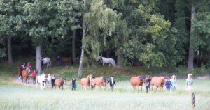 Hästarna på Skånsta Ryttare har återvänt från sitt sommarlov