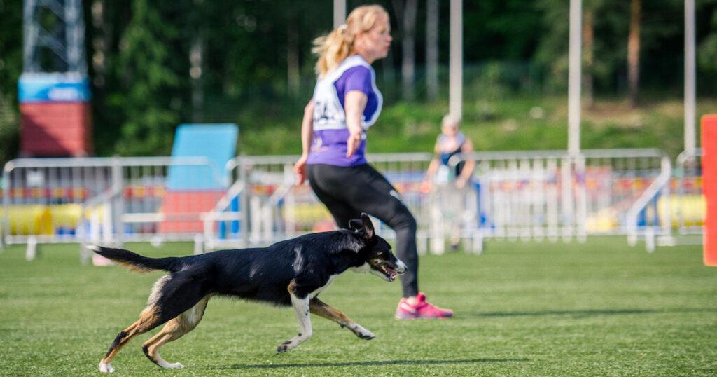 Niina-Liina Linna väljer Nutrolin-serien till sina agilityhundar