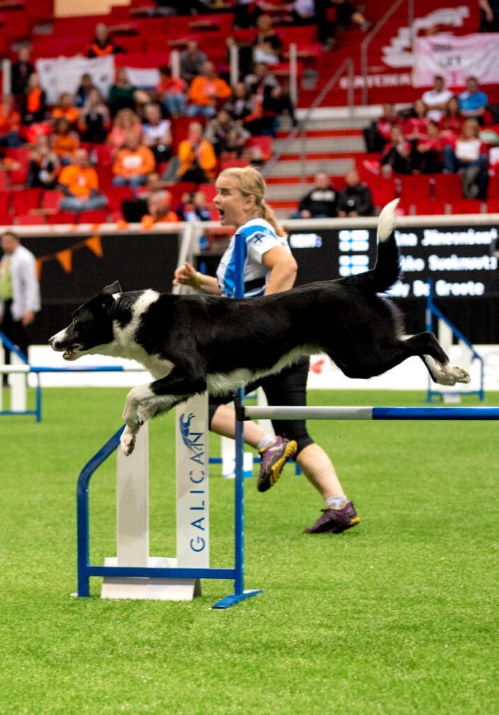 Nutrolin Sport är agilityhundens val