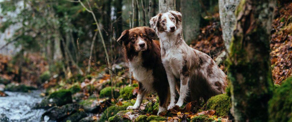Hundar och höst