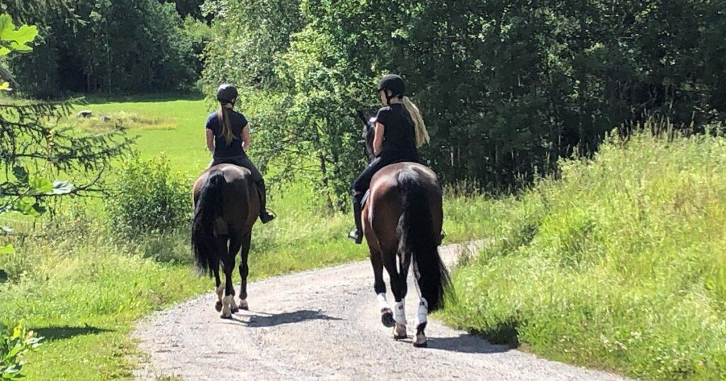 Nya vindar för hästen Gun och hennes familj