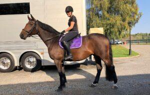 Hästen Gun stortrivs på sitt nygamla stall