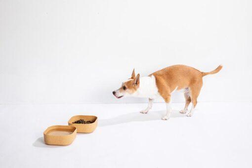 Venandi Design Pet Bowl