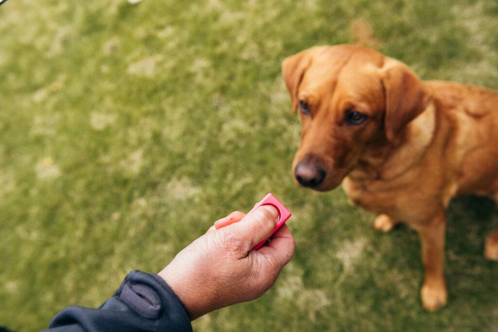 Klickerträning med hunden